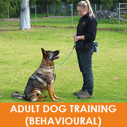 Dog Training Perth
