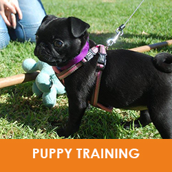 Puppy Training Perth