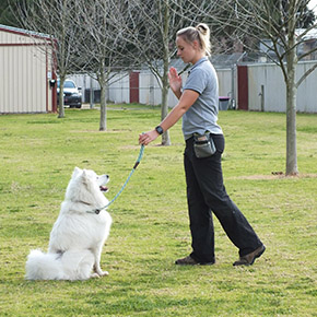 best dog trainers perth