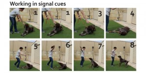 working in signal cues