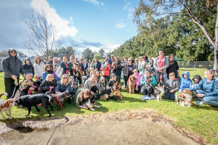 Dog_Charity_Walk_Group_Picture_blog_post