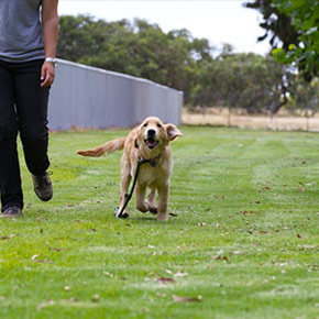 Controlled-Dog-Training-Environment