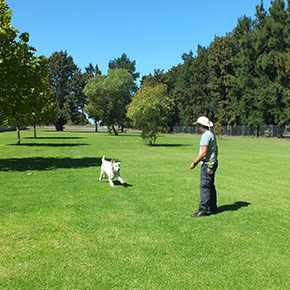 Large-Dog-Training-Grass-Areas