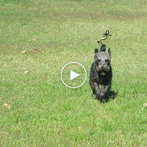 Regular-Dog-Training-Video-Updates