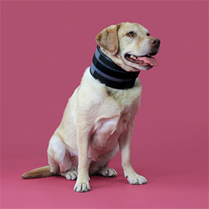 Bite Free Pet Recovery Collar