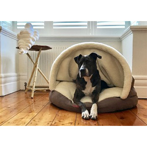 Snooza Cocoon Dog Bed