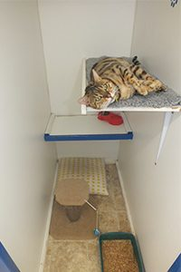 Cat boarding perth, standard room at WCPC