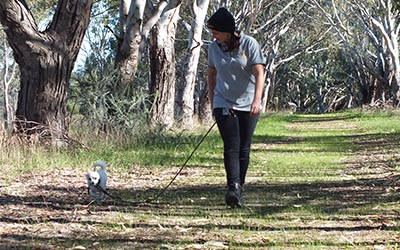 country hikes for dog boarding perth