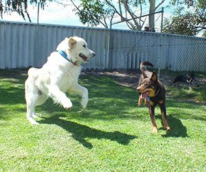 dog boarding perth vs pet sitters perth
