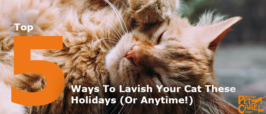 cat holiday activities