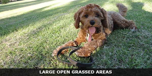 Large Grassed Open Areas For Playing