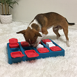 puzzles for dogs