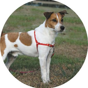 Gentle Leader Easy Walk Dog Harness